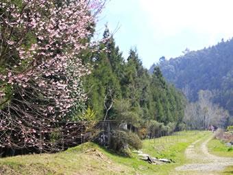 台大-梅峰農場