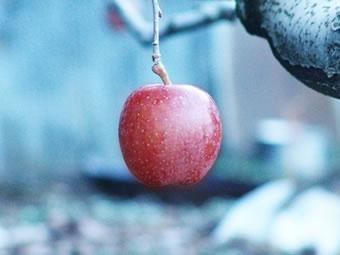 清境蜜蘋果